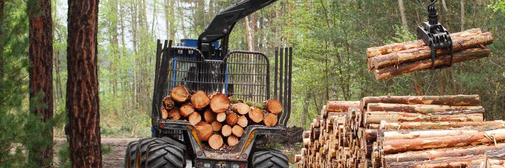 Logging thumbnail