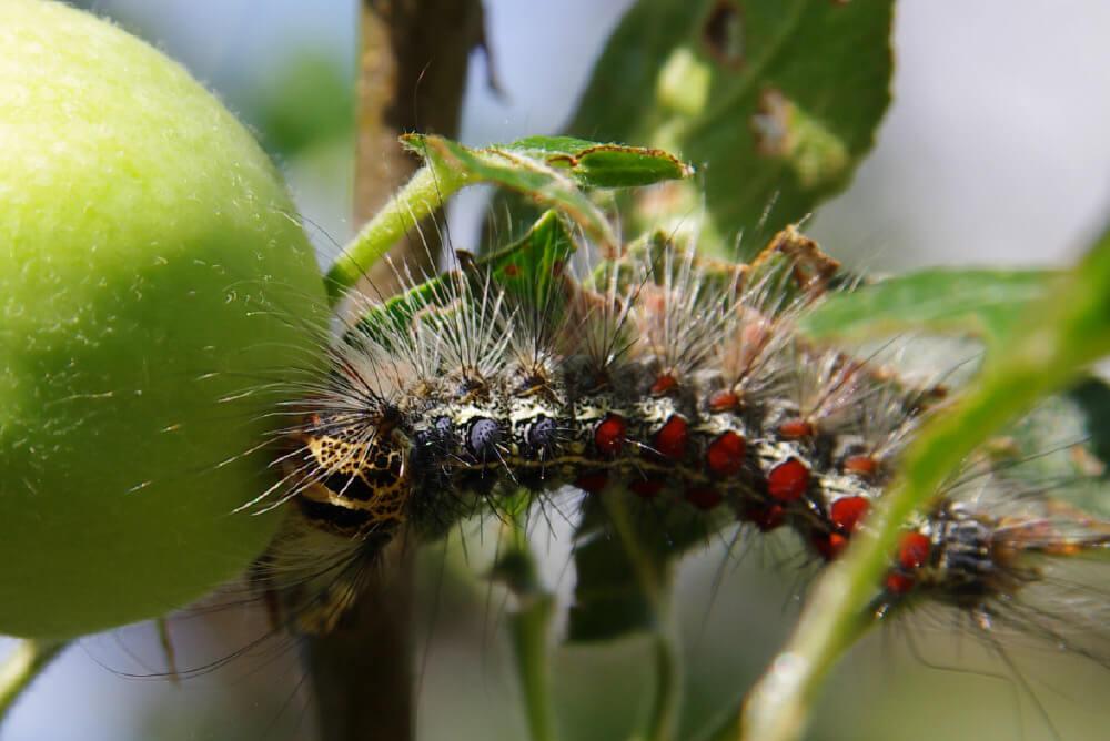 Invasive Species thumbnail